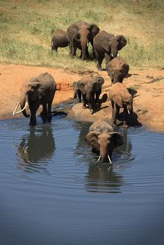 Spot the Big Five on an African Safari... #elephant #travel #adventure