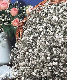 Baby's Breath, Early Snowball 28 Best Perennials for a Cutting Flower Garden Early Snowball Baby's B Best Perennials, Flowers Perennials, Planting Flowers, Cut Flowers, Colorful Flowers, Beautiful Flowers, White Flowers, Tropical Flowers, Spring Flowers