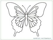 Large Butterfly 2