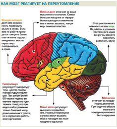мозг инфографика: 19 тыс изображений найдено в Яндекс.Картинках