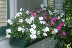 If you are like me and want bang for your buck, Impatiens for your shade garden is a must. They will flower throughout the growing season without needing to be deadheaded - this is a good thing. Garden Landscaping, Patio Gardens, Annual Flowers, Window Boxes, Shade Garden, House Party, Container Gardening, White Flowers, Flower Power