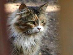 FreebieCat's Cat of The Day Augsut 24, 2015 http://www.freebiecat.com/cat-of-the-day.php