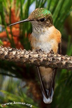 Baby Hummingbird Nest - COOL!