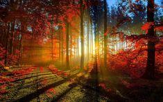 Лес, деревья, дороги, листья, осень, свет, лучи, Рассвет, закат вектор