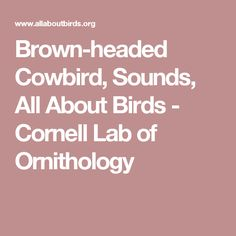 Brown-headed Cowbird, Sounds, All About Birds - Cornell Lab of Ornithology