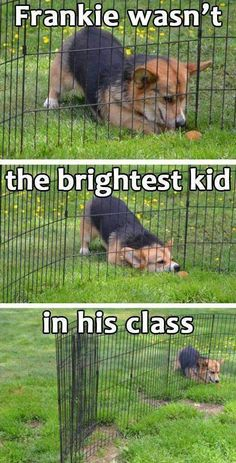 Dump a day Attack of the Funny Animals 50 Funny Animal Pictures Cute Animal Memes, Animal Jokes, Cute Funny Animals, Funny Animal Pictures, Cute Baby Animals, Funny Cute, Funny Dogs, The Funny, Dumb Dogs