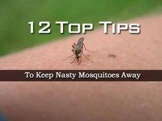 12 Top Tips To Keep Nasty Mosquitoes Away