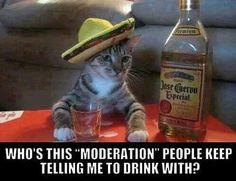 Haha you and me both kitty