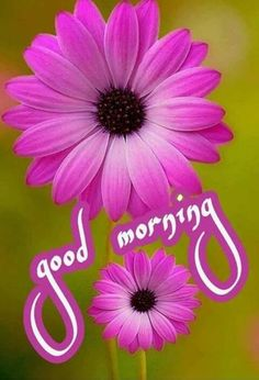 Beautiful Morning Images, Good Morning Monday Images, Good Morning Flowers Pictures, Good Night Flowers, Good Morning Roses, Good Morning Cards, Good Morning Images Download, Cute Good Morning, Good Morning Picture