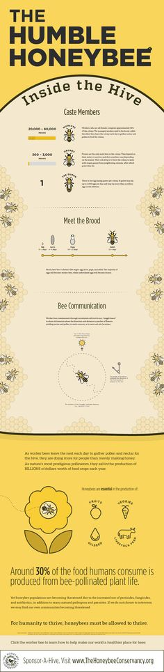 An interview with Hayden Loos, the designer of this bee infographic Hayden took some time to answer some questions about this bee infographic, his interest in bees and how he takes his honey. You can see more of Hayden's designs at www.haydenloos.com 1. What led you to create this bee infographic? I created this bee infographic …