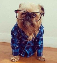 This hipster dog.