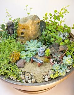 mini zen garten mini bonsai anleitung materialien | pflanzen, Terrassen ideen