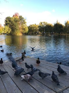 #cluj #clujlove #lakeinthecentralpark #autumn