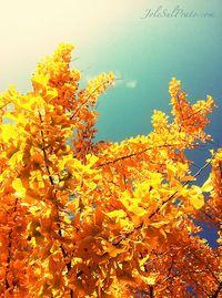 azzurro e giallo contrasto autunnale