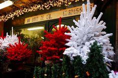 Marché aux Fleurs, Ile de la Cité, Paris, France at Christmas!
