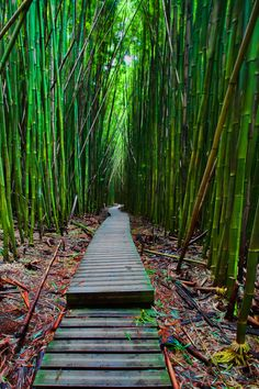 Bamboo Forest Pathway on the Pipiwai Trail - Maui, Hawaii, USA. One of my favourite places in Maui. Hawaii Honeymoon, Hawaii Vacation, Dream Vacations, Vacation Spots, Maui Hawaii, Hawaii Usa, Vacation Ideas, Oh The Places You'll Go, Places To Travel