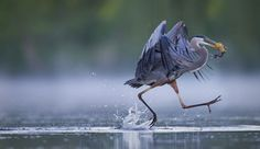 LOOK I CAN WALK ON WATER by Christopher Schlaf