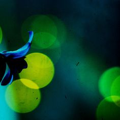 forgive me if im young by *iskandar, via Flickr #photography #bokeh