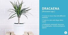gardening tips plants durable air cleaning, gardening, home decor
