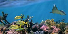 Stop unscrupulous mining group from destroying the Great Barrier Reef