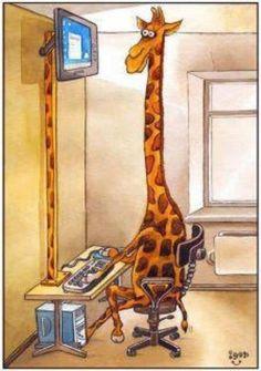 Giraffe at computer