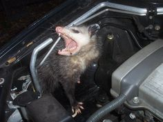 Getting Rid Of Mice In A Car