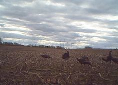 Can Turkey Hunting Help You as a Deer Hunter?