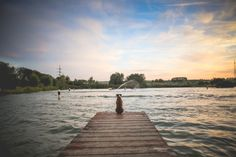 Free Image: Dog Sitting on a Pier | Download more on picjumbo.com!