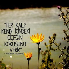 Her kalp kendi içindeki çiçeğin kokusunu verir. Abdülkadir Geylani (k.s)