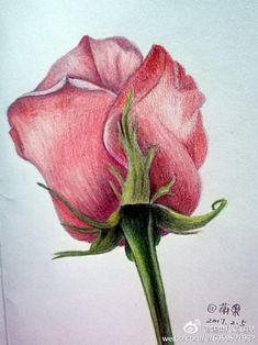 You May Enjoy drawing sketches By Using These Useful Tips Pencil Drawings Of Flowers, Pencil Art Drawings, Love Drawings, Colorful Drawings, Animal Drawings, Drawing Sketches, Watercolor Flowers, Watercolor Art, Color Pencil Sketch