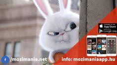 A kis kedvencek titkos élete - magyar szinkronos előzetes #3 (6E) App Store Google Play, Film, Cats, Youtube, Animals, Movie, Gatos, Animales, Film Stock