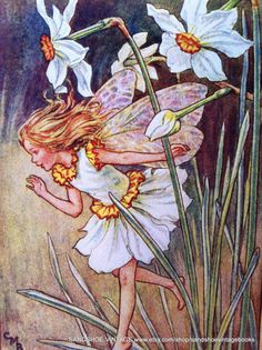 1930s NARCISSUS FAIRY Cicely Mary Barker by sandshoevintagebooks on Etsy