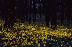The Beautiful Flight Paths of Fireflies | Arts & Culture | Smithsonian
