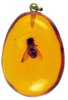 Bumblebee in Amber - 12 million years old - loop added to create pendant