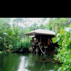 This is where I'd like to stay in the Philippines-- perfect relaxation meditation spot.!!! Palawan- Dab Dab Cottages
