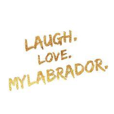 LabbiLove... #Labrador #love #doglover #labbi #forever #doglifestyle Halloween Treats, Trick Or Treat, Labrador, Love, Nice Asses, Amor, Labradors, Labs
