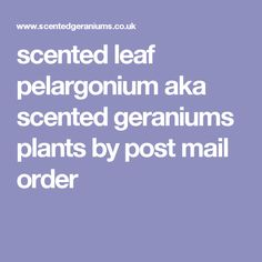 scented leaf pelargonium aka scented geraniums plants by post mail order Geranium Plant, Scented Geranium, Plants By Post, Natural Sponge, Geraniums, Herbalism, Recipes, Herbal Medicine, Rezepte
