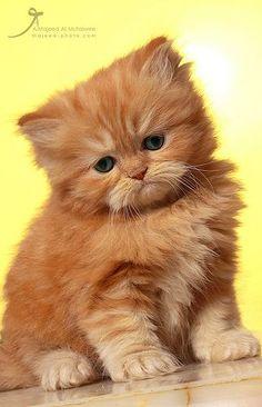 Sad little kitty...