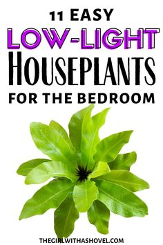 Do you have a dark bedroom?!?! Spice things up with these low light plants for the bedroom! Because even the darkest of spaces can grow the right plants! #plantlove #lowlighthouseplant NOT A LOT OF SUN IN YOUR ROOM? NO WORRIES WITH THESE HOUSEPLANTS! Low Light Houseplants | Indoor Plants for No Sun | Houseplants for Dark Apartments | Indoor Plants for the Bedroom |