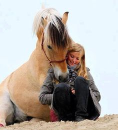 A Norskie girls best friend; the Norwegian Fjord horse.