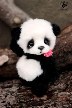 baby pandas You see your crush walking you direction, you tell your friends to act natural but you pop into the most random pose You see your crush walking you direction, y Cute Panda Baby, Baby Animals Super Cute, Baby Panda Bears, Cute Stuffed Animals, Cute Little Animals, Cute Funny Animals, Cute Cats, Baby Pandas, Panda Babies