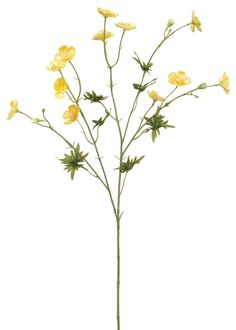 Artificial flowers offer you the opportunity to use your favorite blooms no matter which wedding season it is. You can enjoy cute yellow spring buttercups any time of the year! Yellow Tall x Wide x Blooms Silk 12 Blooms Fake Flowers, Artificial Flowers, Silk Flowers, Spring Flowers, Yellow Wildflowers, Yellow Flowers, Flower Petals, Flower Art, Flower Ideas