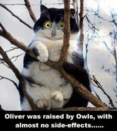 Lil owl kitty !