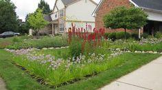Prairie Gardens & Rain Garden Contractors in Wayne County, MI Prairie Garden, Wayne County, Rain Garden, Stepping Stones, Sustainability, Sidewalk, Year 2, Landscape, Building