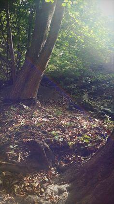 #ağaçlık #orman #good #mood #türk #repin #vsco #vscocam #gökkuşağı #günışığı #sunlight