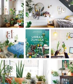 13122 besten urban jungle bloggers bilder auf pinterest zimmerpflanzen pflanzen dekor und balkon. Black Bedroom Furniture Sets. Home Design Ideas