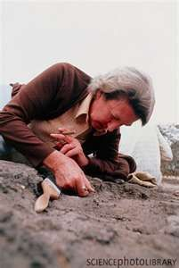 """Mary Leakey: Mary Leakey: Although her husband Louis was happy to take the credit, it was actually Mary who made many of the scientific discoveries, including the """"Zinjanthropus"""" fossil, that made them famous. She went on to establish her own world-renowned reputation, especially when her team located the fossilized footprints made by a couple of bipedal hominids in East Africa that proved that humans were walking upright over 3.5 million years ago."""