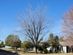 Pecan Tree Landscaping Autumn