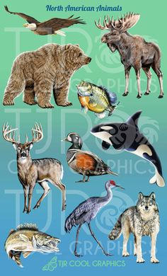 North American Animals Digital Clip Art by CleverVectors on Etsy, $3.95
