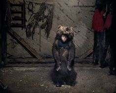 Ciprian, the Bear Dancer (Salatruc, East Romania), 2013 Tamas Dezso